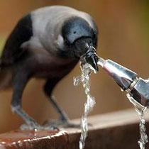 Міськрада підвищила тариф на воду та водовідведення