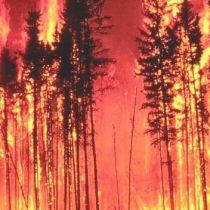 Терміново! На півдні України горять ліси