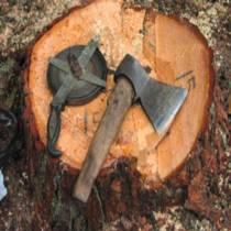 Меблі з дерев міських парків?  Екологи викрили у Харкові новий злочинний  бізнес