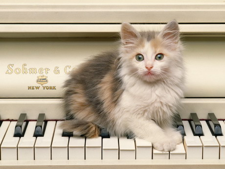 У Харкові вийшов новий навчальний посібник для піаністів з авторською методикою викладання