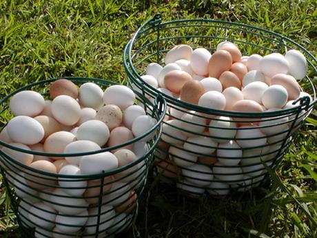 У Харківській області тривають процеси монополізації ринку м'яса і комбікормів. Очікується різке підвищення цін на яйця