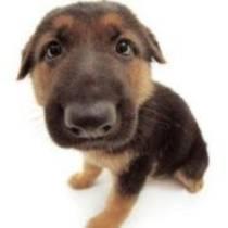 Конференція захисників тварин «Євровбивство-2012» у Варшаві: Українська влада прагне європейських грошей, проте чинить за азіатськими правилами.