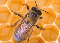 У Харкові обіцяють створити ринок справжнього меду від щирих пасічників