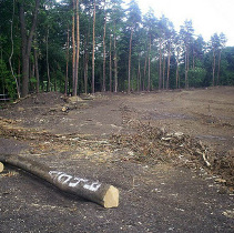 У харківському лісопарку затримали представників «Зеленого фронту»
