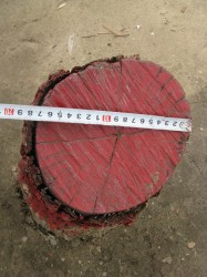 Навколо підприємств хімічної промисловості вирубують дерева, а пеньки фарбують ледь не всіма кольорами веселки