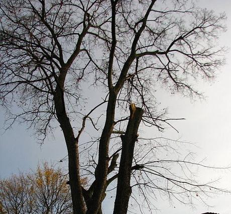 У Харкові молоді Рухівці провели акцію «Дерево Ботхі»