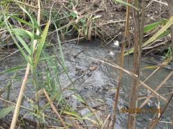Каналізаційні стоки Темнівської виправної колонії № 100 зливаються в річку Уди. Потім це «добро» впадає в Сіверський Донець і прямує до мешканців Донбасу