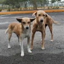 Влада Кривого Рогу планує нарешті побудувати в 2012 році притулок для тварин