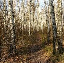 """Дергачівський районний суд повернув """"Березовий гай"""" в П'ятихатках  державному лісгоспу"""