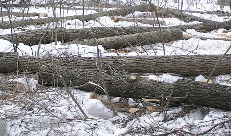 В районі станції метро «Завод ім. Малишева» вирубано близько 50 дерев