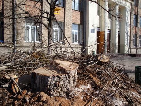 Харківський відділ освіти змушує вирубувати дерева на шкільних подвір'ях