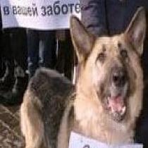Акція на захист бездомних тварин в Донецьку