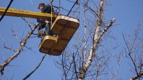 В районі Харківського коксового заводу відновились вирубки зелених насаджень