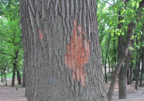 У парку видатного українського драматурга Григорія Квітки-Основ'яненка близько третини дорослих дерев намічено під вирубку