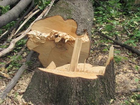 Харківська екологічна інспекція нарахувала 300 тисяч збитків від нелегальної вирубки дерев у Парку Горького