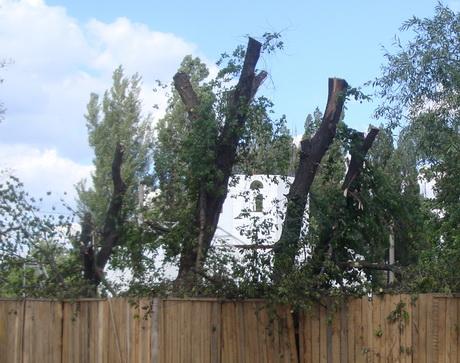 Навколо храму Святителя Миколая вирубано майже всі дерева