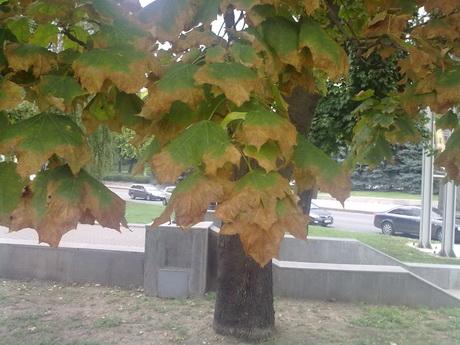 Сергій Чадромцев: «Дерева гинуть через нестачу вологи»