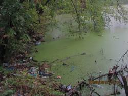 У місті Харкові два озера перетворюються на мертві товщі сіро-зеленої рідини