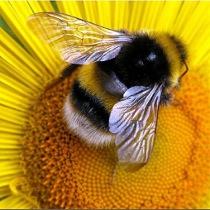 Луганська область потрапила до  світової еліти бджільництва
