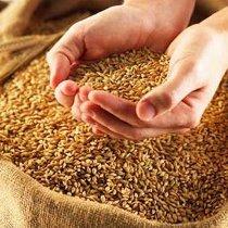 На Харківщині прокуратура викрила посадовців держпідприємства, які «наліво» продали тисячу тонн зерна Держрезерву