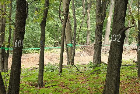 Адміністрація Дергачівського району намагалась незаконно вилучити понад 60 гектарів лісового фонду