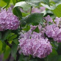 Sinoptik: Погода в Харкові та Харківській області на п'ятницю, 17 травня