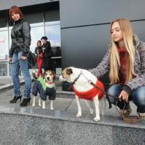 """Хокеїсти клубу """"Донбас"""" підтримали донецький притулок для тварин """"ПІФ"""""""