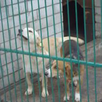 За підтримки фонду Р.Ахметова в Донецьку створили сучасний притулок для собак