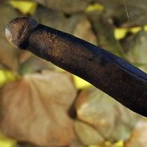 Археологи відкопали секс-іграшку печерних жінок