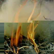 У Ялтинському гірсько-лісовому заповіднику сталося дві пожежі