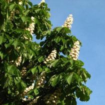 У харківських дерев – нова хвороба