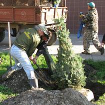 Харківські дерева ростуть і в мороз