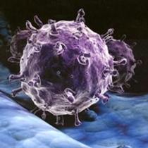 Вірус нового грипу хочуть навмисно завезти до Харкова