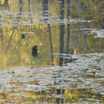 Яка вода чекає харків'ян у березні?