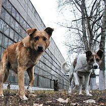 Харків'яни полюбляють безпритульних собак