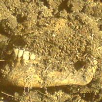 У Парку Горького знайдено людські кістки, але роботи з будівництва дороги не припиняються