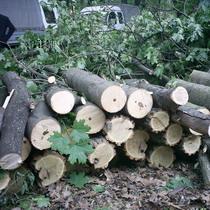 Судове засідання у справі захисту Лісопарку від вирубки бізнесменом Сапроновим перенесено