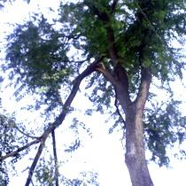 Термінового ремонту даху будинку харків'яни чекають роками і за вирубку аварійних дерев сплачують із власної кишені