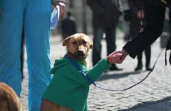 Євромайдан для собак. Харків'яни влаштували «виставку-віддачу»