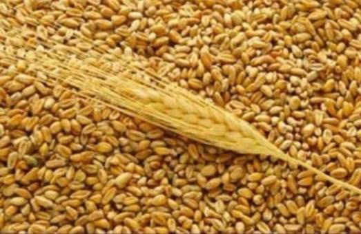 Харківські аграрії рекомендують використовувати для засіву полів гібридні зернові сорти, розроблені Інститутом рослинництва ім. В. Юр'єва