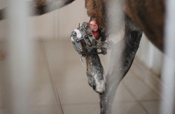 Собаки, що постраждали на війні