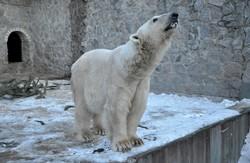 У Харківському зоопарку про тварин взимку не забувають