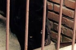 У Мережі опубліковані фото ягуара, який травмував жінку (фото)