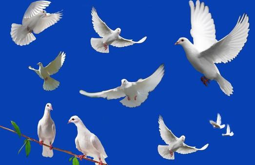 В Муніципалці оселяться одеські голуби