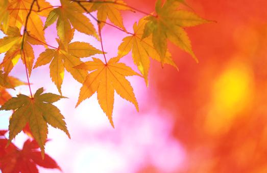 Прогноз погоди на 15 жовтня 2015 року