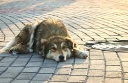 В Харкові продовжують знищувати безпритульних тварин