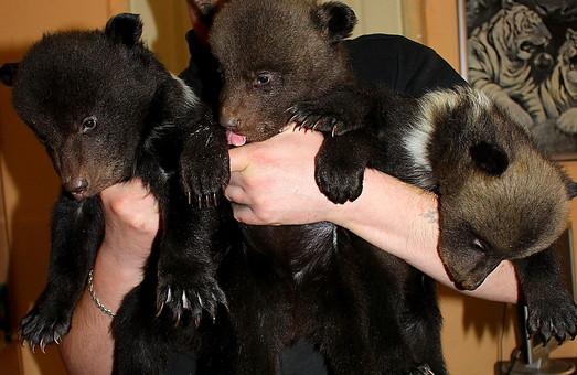 У Харківському зоопарку народилися ведмежата