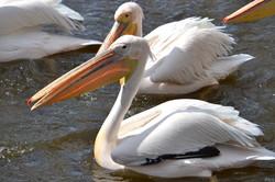 У Харківському  зоопарку зустріли весняних птахів