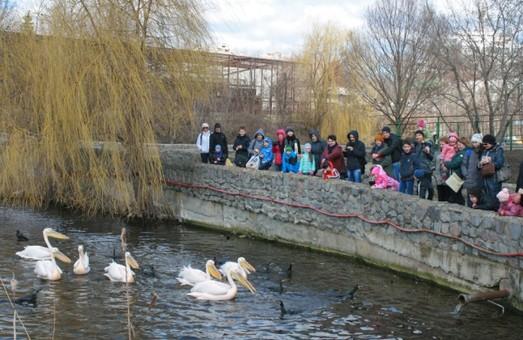 У неділю до зоопарку можна потрапити безкоштовно