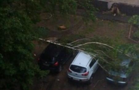 Повалені дерева та затоплені вулиці. Негода на Харківщині триватиме (відео)